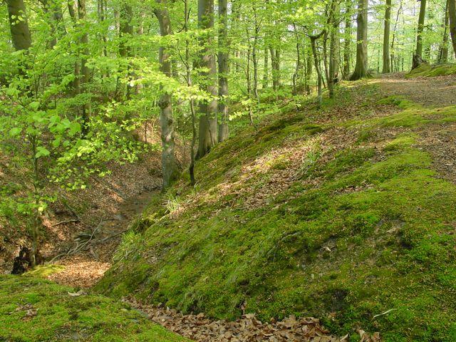 WW: Wald-Workout!
